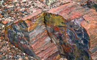 Аммонит, трилобит, дендролит и другие камни органического происхождения