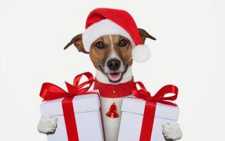 12 драгоценных камней для года Собаки