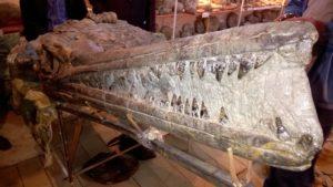 дагестан - найдены окаменелые кости динозавра