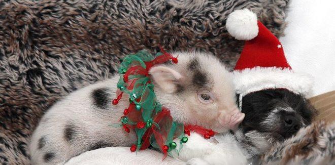поросенок и собака - год свиньи