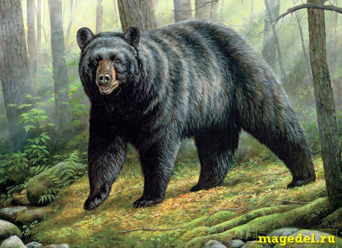 Что значит Чертог Медведя по дате рождения