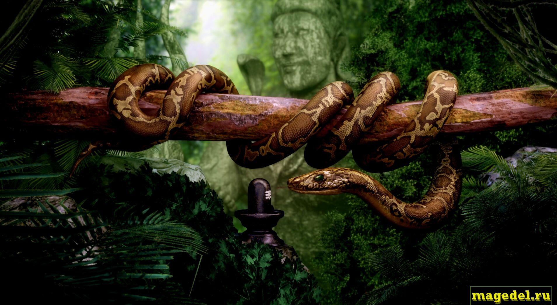 Что значит Чертог Змея по дате рождения